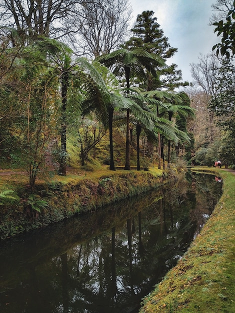 River in the jungle with palm trees Free Photo