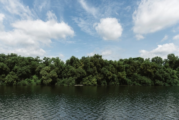 River and rainforest Free Photo