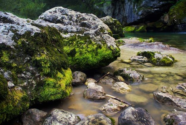 スロベニアのボベツで日光の下でコケに覆われた岩に囲まれた川 無料写真