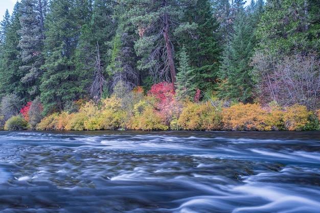 昼間の秋に花に囲まれた川 無料写真
