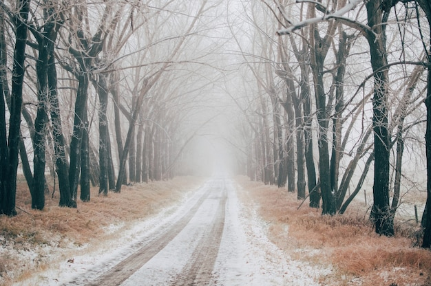 Road covered with snow between the bare trees on a foggy winter day Free Photo