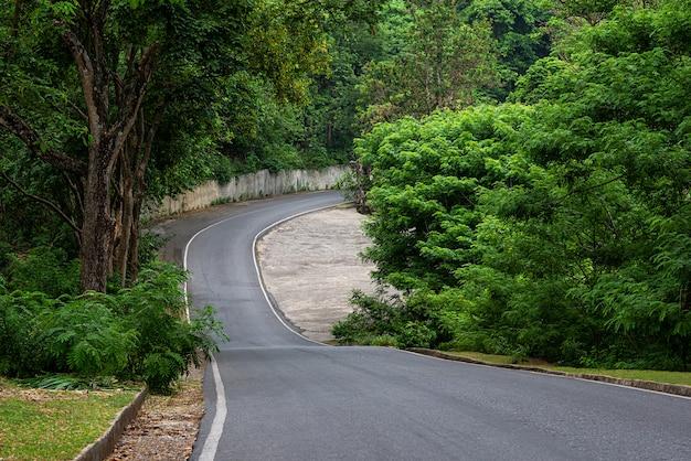 Road in forest Premium Photo