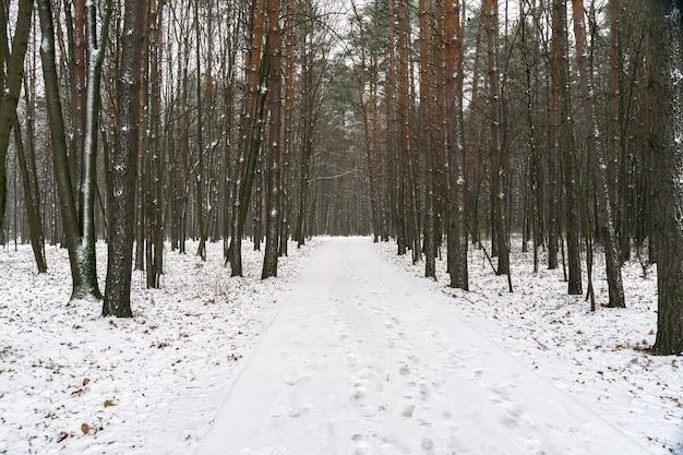 雪に覆われた森の中の道。冬の風景 Premium写真