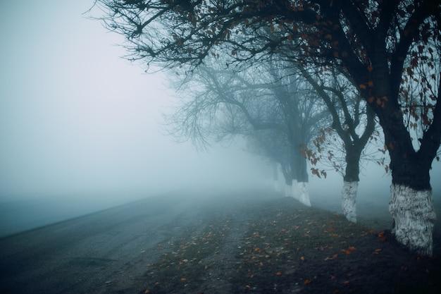Дорога в туманное раннее осеннее утро. силуэты деревьев Premium Фотографии