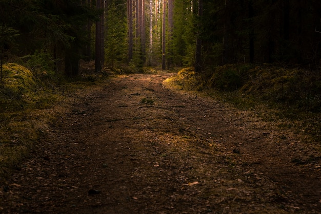 Road in the middle of a forest with tall green trees Free Photo