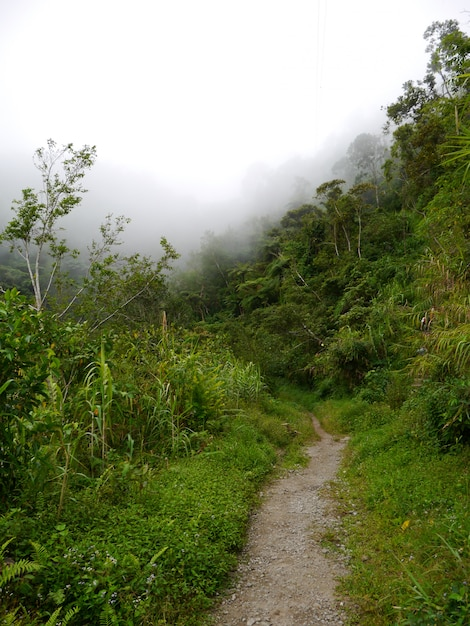 The road on mountains in banaue, philippines Premium Photo