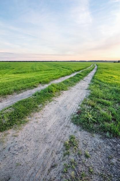 Road in a rural field in summer Premium Photo