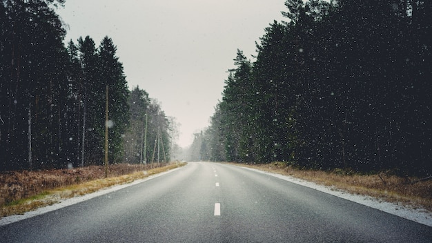 Road surrounded by forests and dry grass covered in snowflakes during winter Free Photo