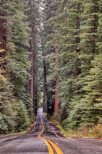 Дорога в окружении высоких деревьев на проспекте гигантов в калифорнии Бесплатные Фотографии