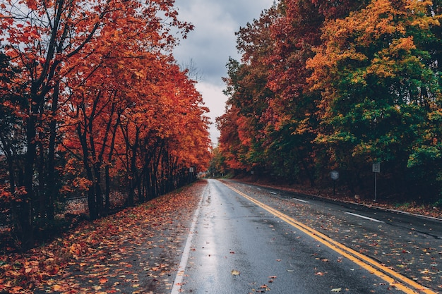 Road surrounded by trees with colorful leaves during fall Free Photo