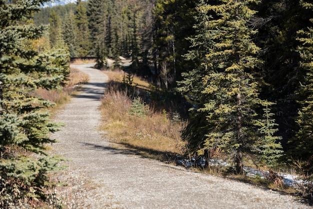 緑の森を抜ける道 無料写真
