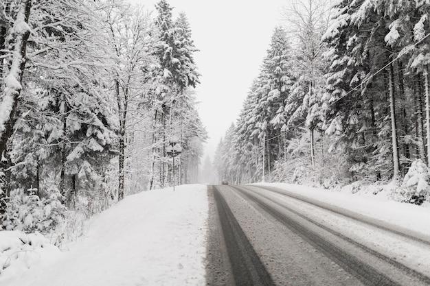 Road through snowy winter forest Premium Photo