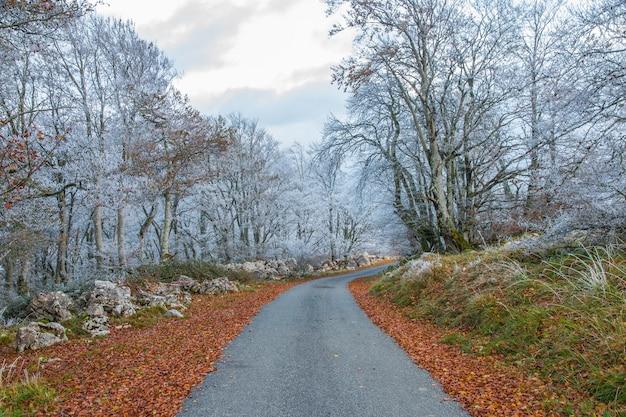 Strada attraverso i confini del bosco con alberi bianchi gelidi Foto Gratuite