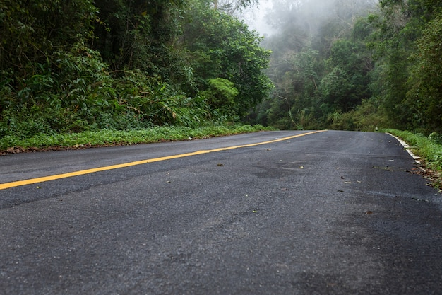 Road in with nature forest and foggy road  of rain forest Premium Photo