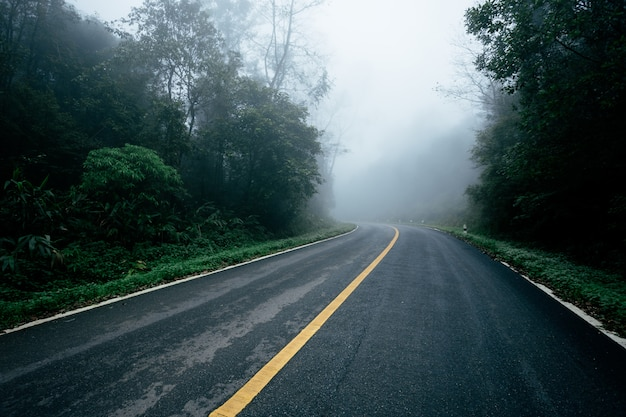 Road in with nature forest and foggy road  of rain forest. Premium Photo