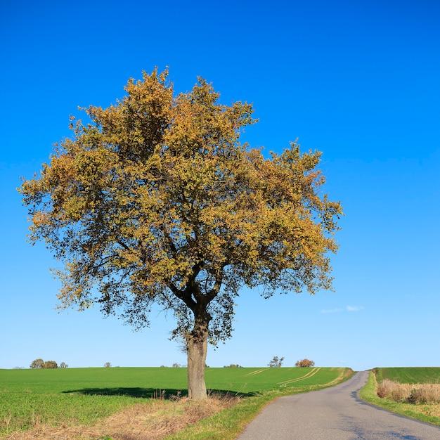 秋の晴れた日に木のある道 Premium写真