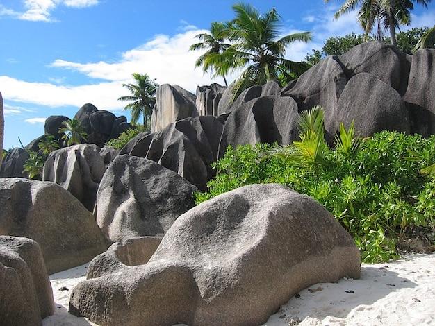 Rock Palm Trees Seychelles Island Sand Holiday Photo