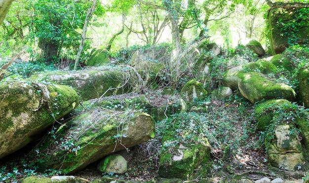 Скалы в лесу Premium Фотографии