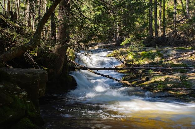 Rocky mountain stream and gum trees Premium Photo