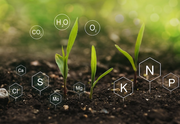 Role of nutrients mineral in corn plant and soil life with digital mineral nutrients icon. Premium Photo