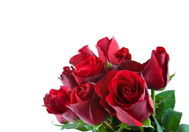 romance romantic fragrant affection rose Free Photo