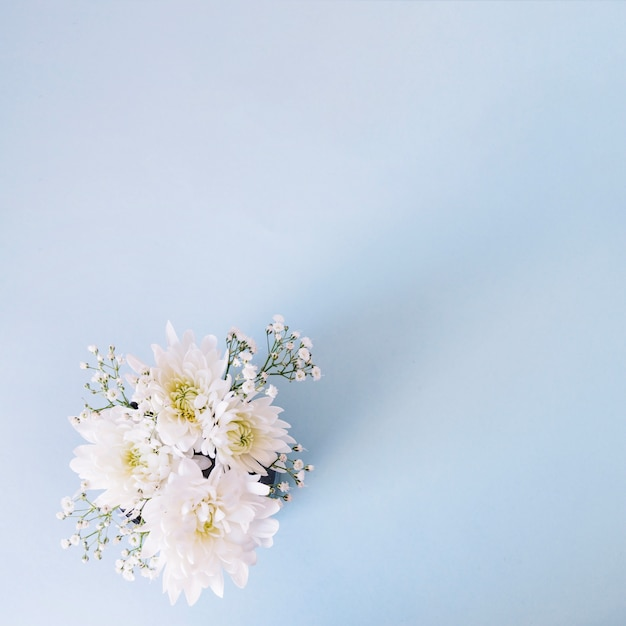 Romantic composition of gentle flowers on blue Free Photo