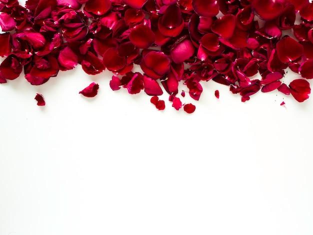 Romantic red rose petals on white background Premium Photo