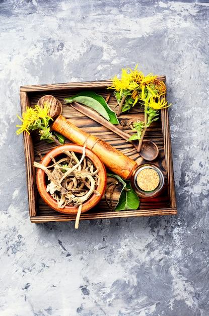 Root and tincture of elecampane Premium Photo