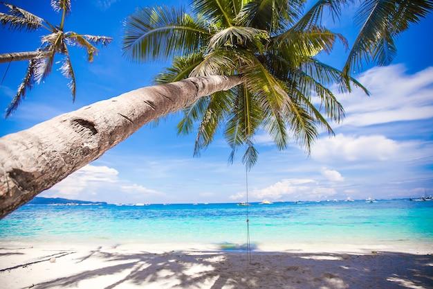 Rope swing on big palm tree at white sandy beach Premium Photo