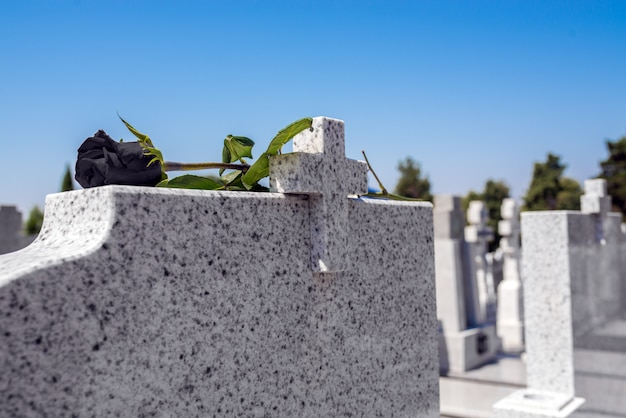 Rose in a cemetery with headstone Premium Photo