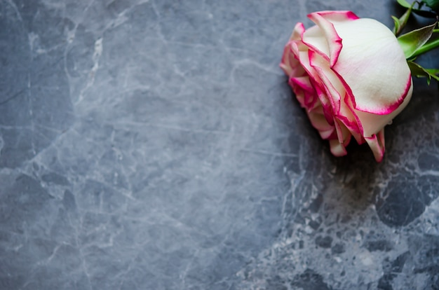 Rose on dark marble background with place for text. flat lay. Premium Photo