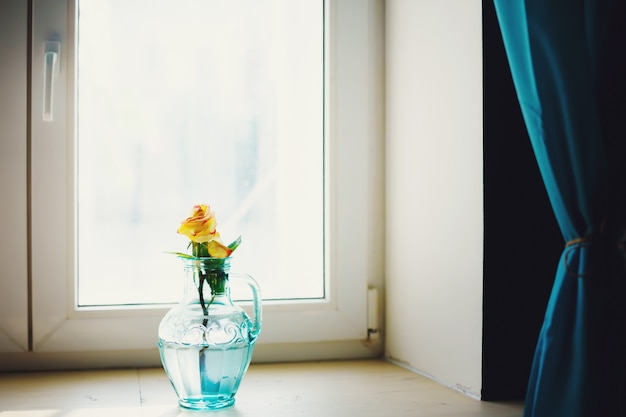 Rose flower in blue vase near window Premium Photo