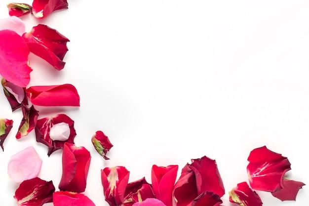 白い背景の上のバラの花赤とピンクの花びら。バレンタインデーの背景。フラットレイ、上面図、コピースペース。 Premium写真