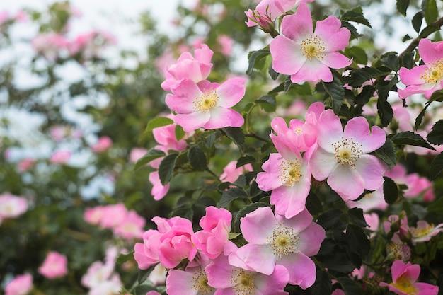 Rose garden over green. Free Photo