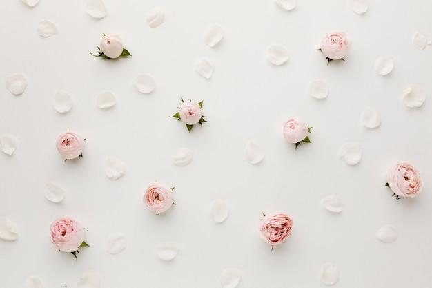 장미와 꽃잎 배열 평면도 무료 사진