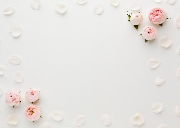장미와 꽃잎 프레임 복사 공간 프리미엄 사진