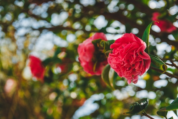 Roses growing on the branch of a tree Free Photo