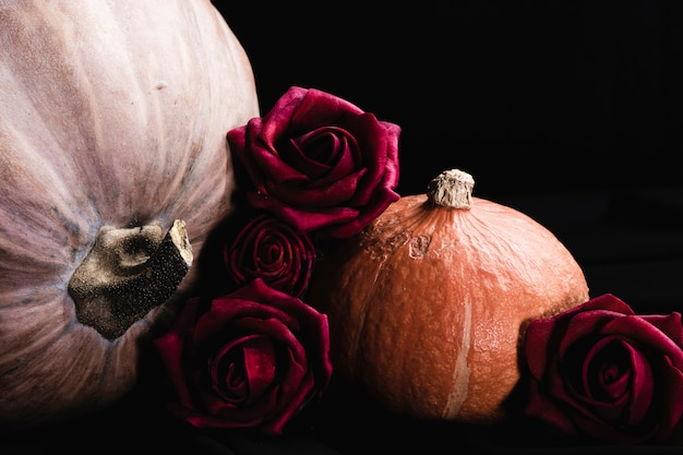 Roses with pumpkins on black background Free Photo