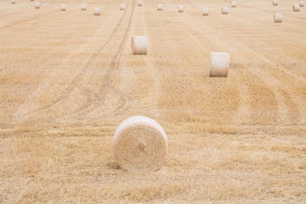夏に小麦の収穫後roundの丸いba Premium写真