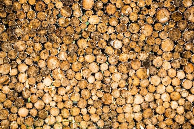 丸いチークの森の木は切り株刈り取らグループをサークルします。森林破壊。 Premium写真