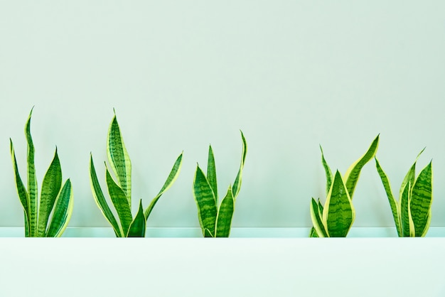 A row of green leaves on the background of a light wall. Premium Photo