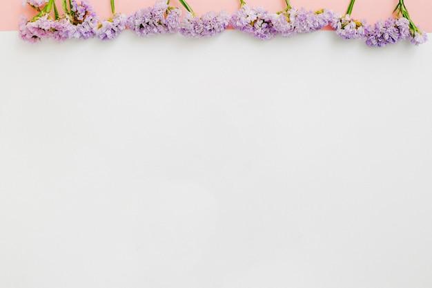 Row of purple flowers on white background photo free download row of purple flowers on white background free photo mightylinksfo