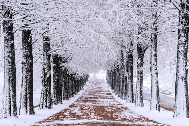 떨어지는 눈과 겨울에 나무의 행 무료 사진