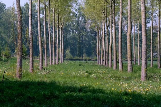 Ряд деревьев с зеленой травой в земле Бесплатные Фотографии