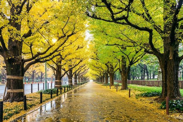 秋の黄色い銀杏の木の列。東京の秋の公園。 無料写真