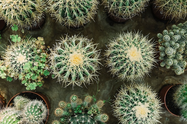 Row of spiked succulent plants Free Photo