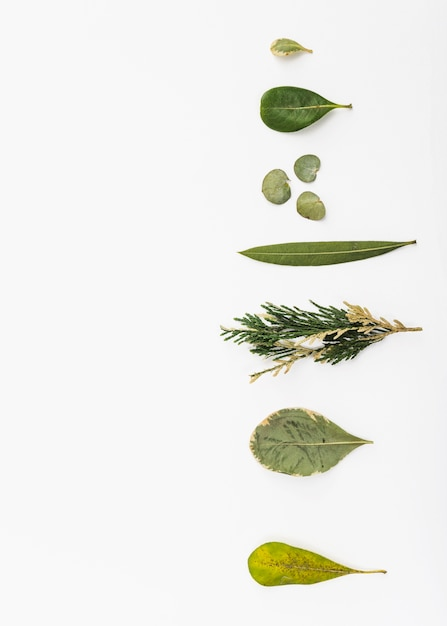 Row of various plant leaves Free Photo