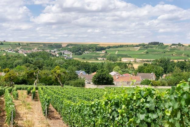 シャンパンのブドウ園でブドウを漕ぐ Premium写真