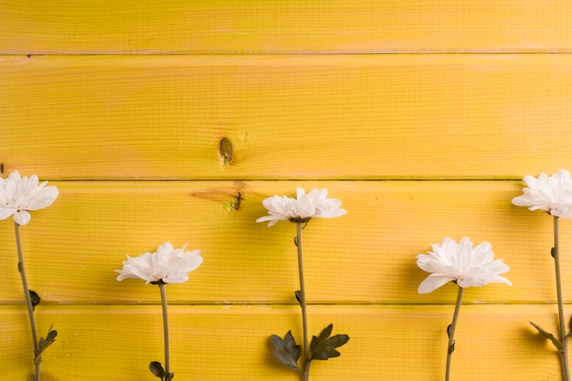 Row of white flowers on yellow wooden background Free Photo