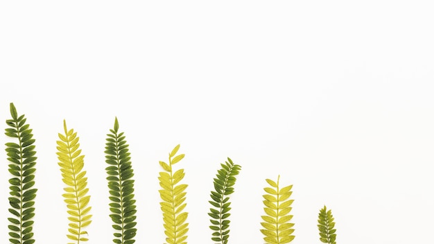 Row of yellow and green fern sprigs Free Photo